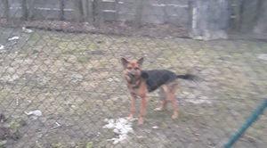 Znaleziono psa w miejscowości Osówka