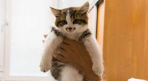Poszukujemy właściciela małego kotka