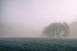 Na zdjęciu znajduje się drzewo i kawałek pola, okryte przez gęstą mgłę