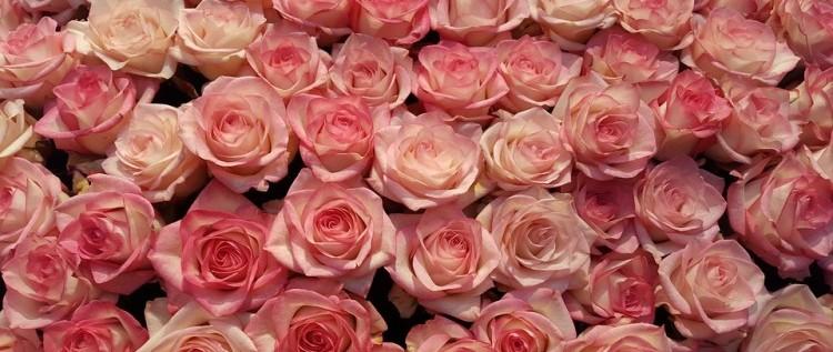 XIX Święto Róż w Końskowoli