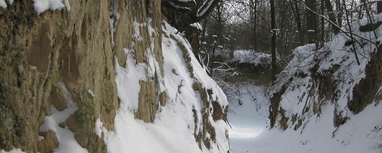 Zaśnieżony wąwóz, drzewa bez liści, zima, korzenie