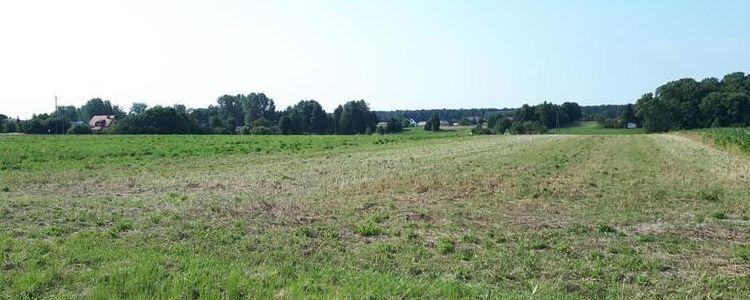 Działka, zielona trawa, niebieskie niebo, drzewa na horyzoncie