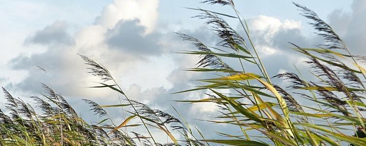 Grafika pogodowa wiatr