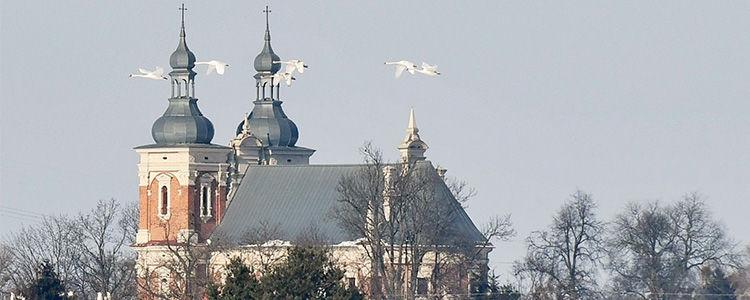 Łabędzie na tle kościoła w Gołębiu