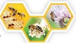 Pszczoły w naturze na plastrach miodu