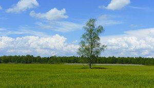 Ministerstwo Środowiska wyjaśnia zmiany przepisów dot. usuwania drzew