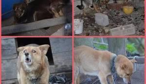 Zaginione psy z posesji w Karolinie