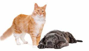 Dofinansowania sterylizacji/ kastracji zwierząt właścicielskich na 2020 rok
