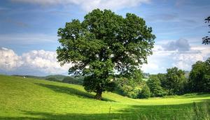 Harmonogram zebrań wiejskich w sprawie podziału funduszu sołeckiego na 2021 rok