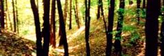 Przystanek 15. Las liściasty sadzony przez dzieci