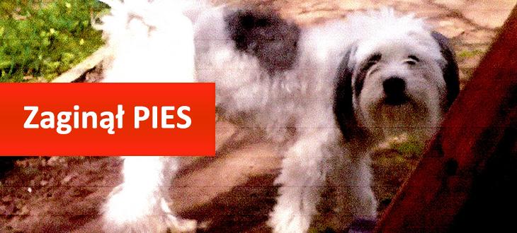 Dnia 10.12 2014 r. w Rzeczycy Księżnej Zaginął Ukochany Pies!