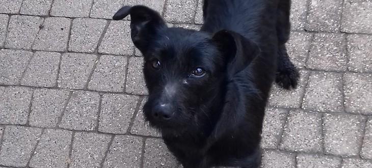 Znaleziono zbłąkanego psa
