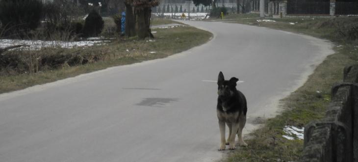 Znaleziono zbłąkanego psa -  Pies Łychów Szlachecki