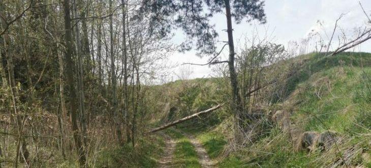 Wąwóz z zawalonym drzewem na drogę