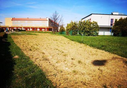 Na terenie naszego miasta powstają łąki kwietne