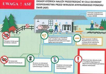 Ryzyko pojawienia się ASF – apel o przestrzeganie zasad bioasekuracji