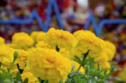 Sadzimy kwiaty na skwerach i placach
