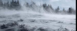 Śnieżyce