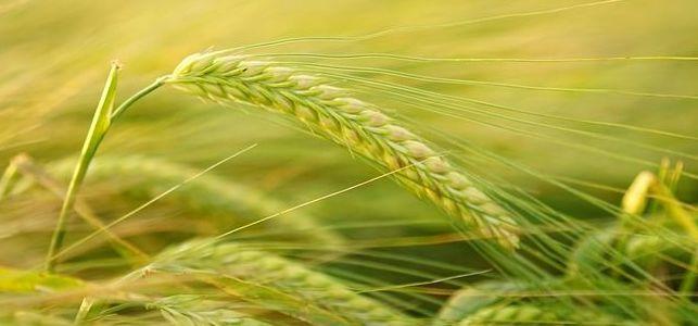 Ogłoszenie o szkoleniu dla rolników