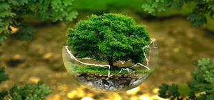 Drzewo w szklanej zbitej kuli