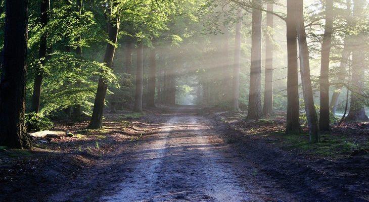 Wsparcie na inwestycje zwiększające odporność ekosystemów leśnych i ich wartość dla środowiska w ramach poddziałania 8.5 PROW 2014-2020.