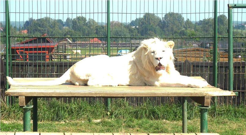 Pomoc dla zwierzaków z Zoo Wojciechów