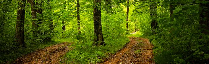 Nadzór nad lasami niestanowiącymi własności Skarbu Państwa - Czerwiec 2016