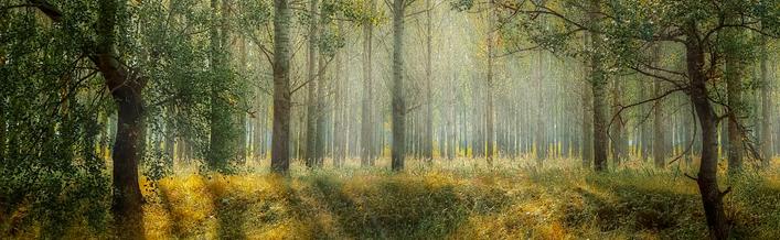 Informacja Ministra Środowiska w sprawie monitoringu lasów w latach 2016-2020