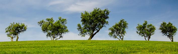 KOMUNIKAT dotyczący wycinki drzew i krzew