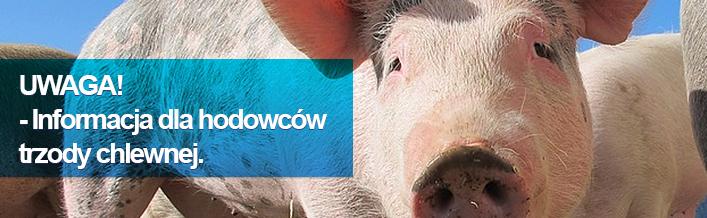 Uwaga hodowco świń!