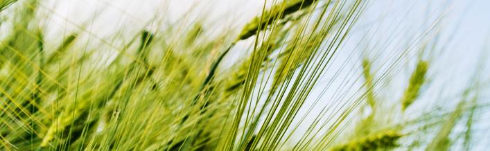 """Wręczenie odznaki honorowej """"Zasłużony dla rolnictwa"""" odbędzie się podczas Święta Plonów"""