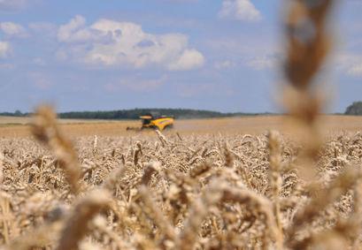 Traktor na polu podczas żniw