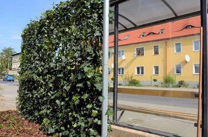 Zielone przystanki w Żarowie