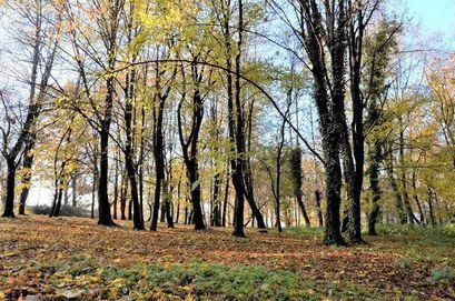 Zgłoś drzewo na pomnik przyrody - ratujmy drzewa dla przyszłych pokoleń!