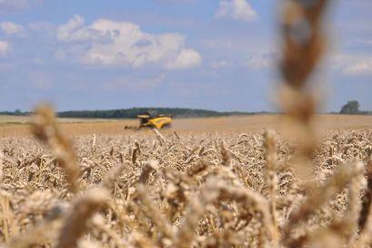Żniwa na polu na terenie gminy Żarów