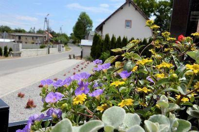 kwiaty skwer Mielęcin