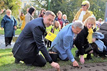 zastępca burmistrza Przemysław Sikora, Robert Jagła i Sabina Cebula podczas sadzenia cebulek żonkili w Świdnicy