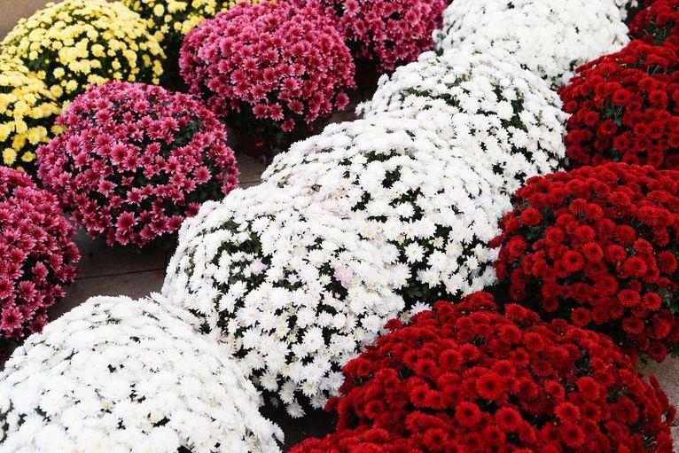 Sprzedaż zniczy i kwiatów przed dniem Wszystkich Świętych