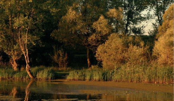 Drzewa przy wodzie