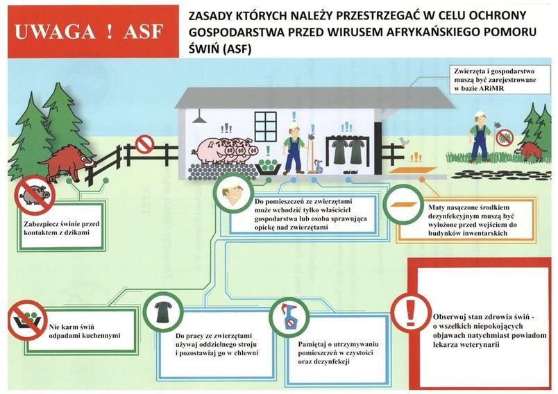 ASF, czyli afrykański pomór świń – nie jest groźny dla ludzi, ale jest bardzo szkodliwy dla gospodarki i niebezpieczny dla Waszych gospodarstw. Główną przyczyną rozprzestrzeniania się wirusa są zarażone dziki. Niestety przyczyną bywa też człowiek i dlatego przypominamy o podstawowych zasadach postępowania. Prosimy o bezwzględne przestrzeganie zasad bioasekuracji: nie kupujcie świń z niewiadomego źródła pochodzenia, utrzymujcie świnie w sposób wykluczający kontakt z dzikami, stosujcie tylko pasze zabezpieczone przed dostępem zwierząt wolno żyjących, wyłóżcie maty nasączone środkiem dezynfekcyjnym przed wjazdami i wyjazdami z gospodarstw oraz przed wejściami do pomieszczeń, w których utrzymywane są świnie. Przypominamy też, że za brak stosowania zasad bioasekuracji będą nakładane kary administracyjne.